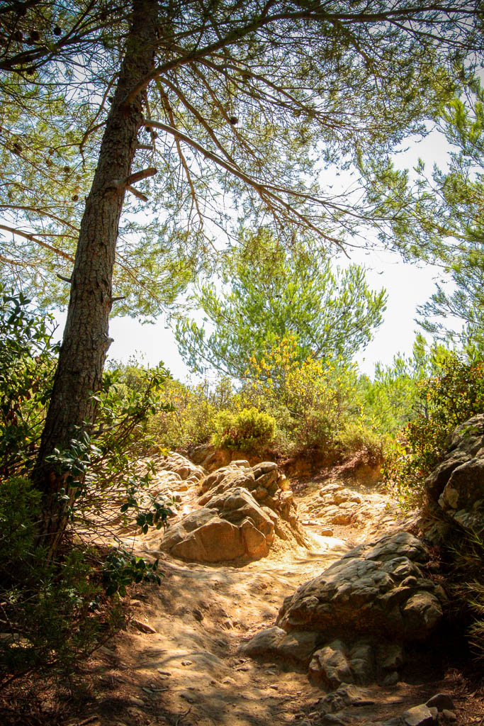 Aromes & faune, Garrigue, Occitanie, Paysage, South of france, Sud de France