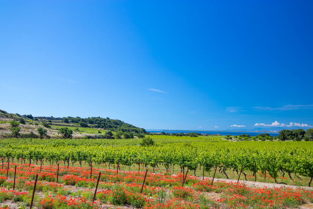 Gruissan, Mer, Occitanie, Région Languedoc, Saisons, South of france, Sud de France, Vigne, printemps