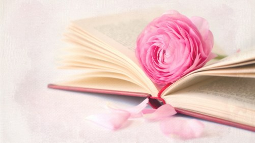 pink-rose-flower-with-book