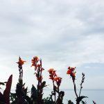 Un petit coin de paradis en Normandie