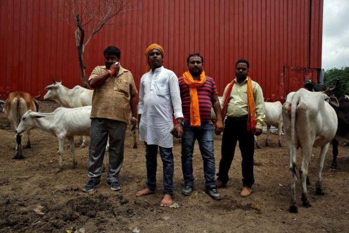 Resultado de imagen de cow protectors india