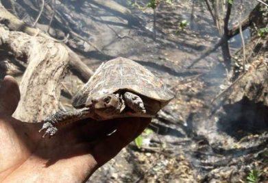 tortuga incendio forestal