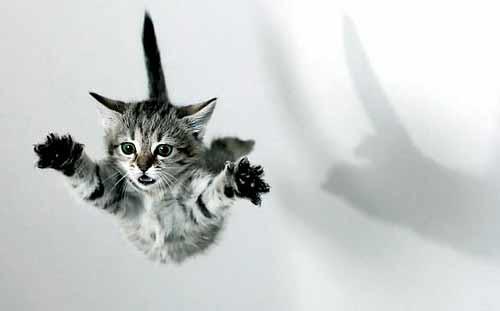 gato-cae