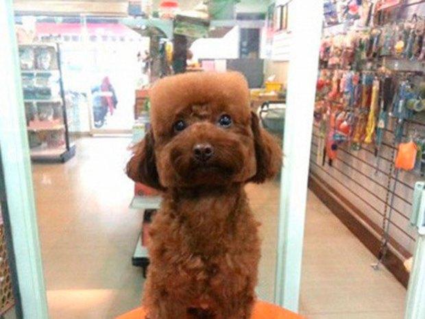 O Dog Hairstyle: Perros Con Cabeza Cuadrada, La Nueva Moda En Taiwán (+Fotos