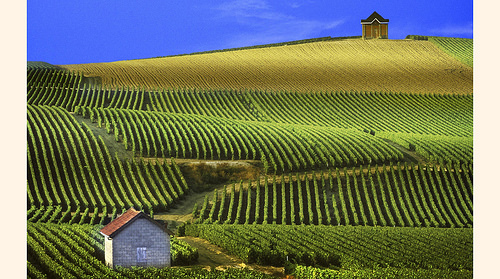 Viñedos de Champagne en Francia