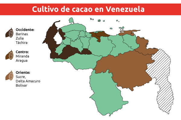 cultivo-de-cacao