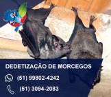 dedetização de morcegos