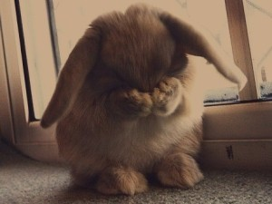 Rabbit of Embarrassment