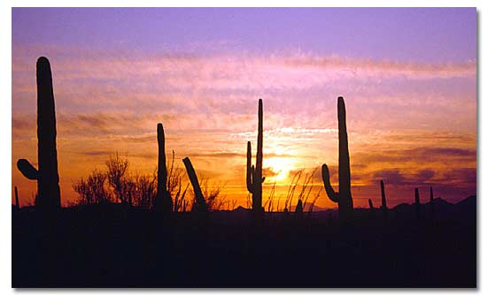 Image result for sonoran desert pictures