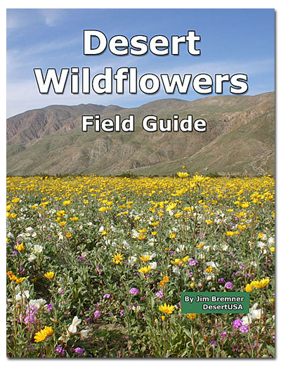 Desert Wildflower Field Guide   DesertUSA Desert Wildflowers ebook