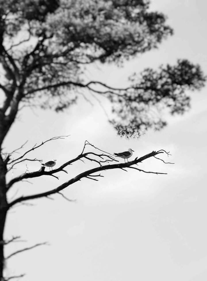 Oiseaux sur une branche