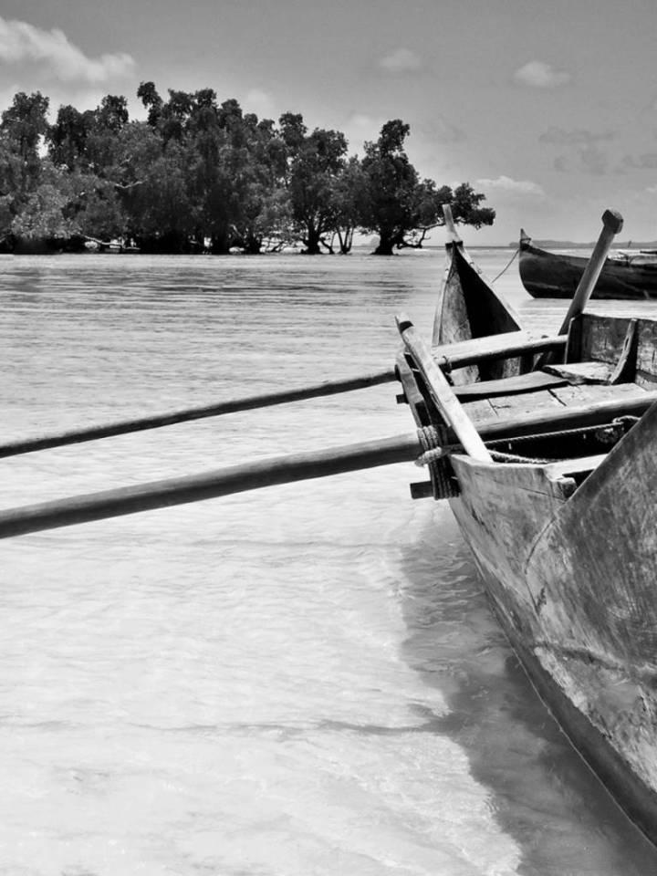 Dans la mangrove