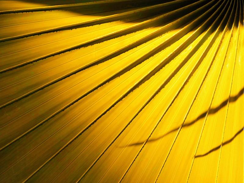 La couleur jaune · Des Goûts et des COULEURS