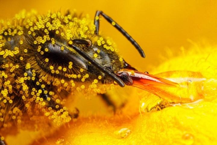 Les produits de la ruche: le pollen