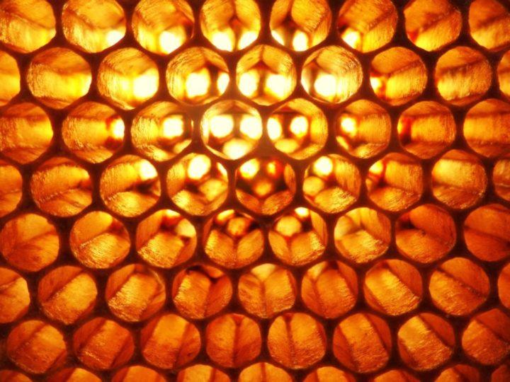 Architectes de la ruche