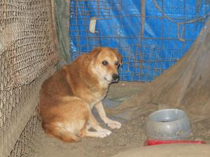 Abel - chiens adoptés en 2013