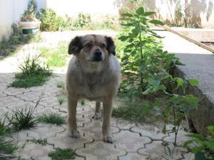 Bambitza - chiens adoptés en 2013