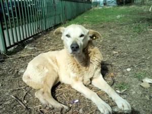 Cali - chiens adoptés en 2013