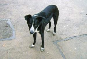 Cici - chiens adoptés en 2013