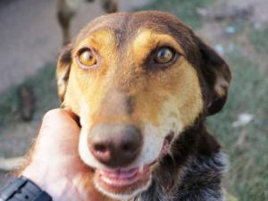 Dea - chiens adoptés en 2013