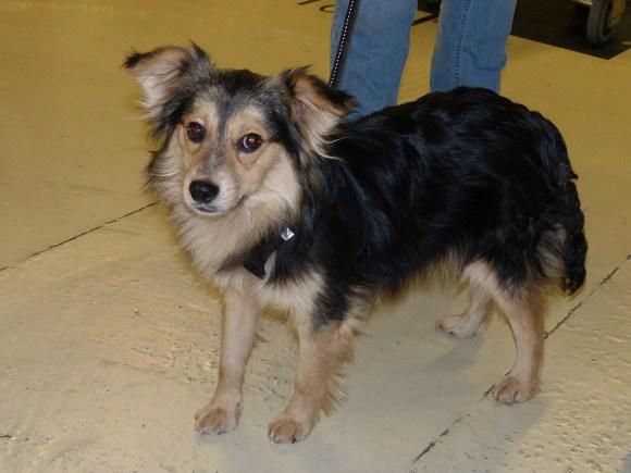 Edy - chiens adoptés en 2016