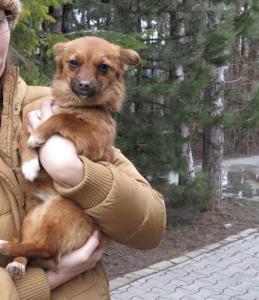 Foxy - chiens adoptés en 2013