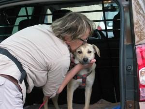 Molly chienne famille retrouvée