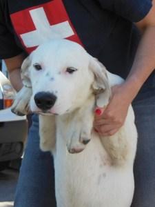 Maia - chiens adoptés en 2013