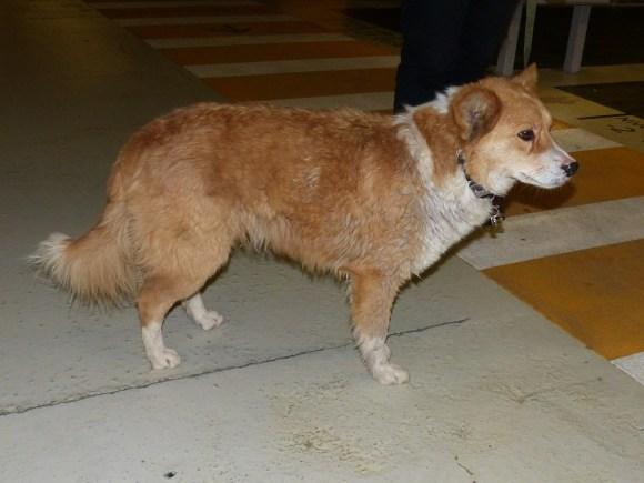 Mike - chiens adoptés en 2016