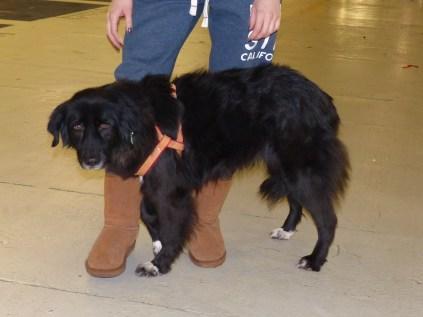 Benny - chiens adoptés en 2014