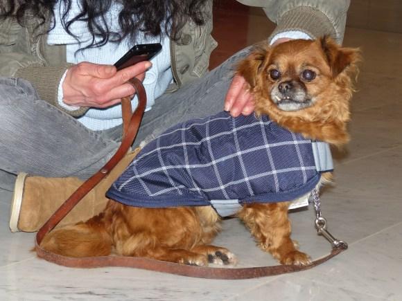 Karina - chiens adoptés en 2014