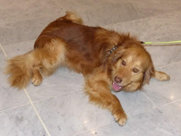 Leu - chiens adoptés en 2014