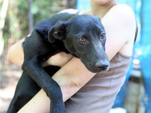 Tristan - chiens adoptés en 2014