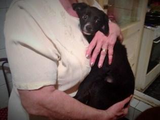 Zuza - chiens adoptés en 2015
