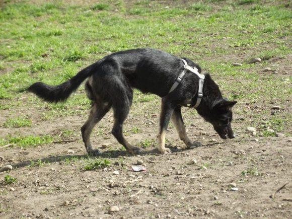 Mika au parc à chiens (avril 2012)