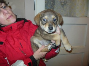 Ambre - chiens adoptés en 2013