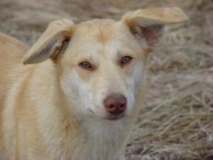 Amy - chiens adoptés en 2013