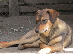 Betsy - chiens adoptés en 2013