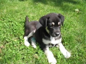 Emma - chiens adoptés en 2013