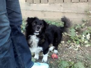 Marc - chiens adoptés en 2014
