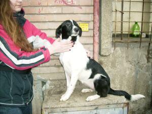 Pépita - chiens adoptés en 2013