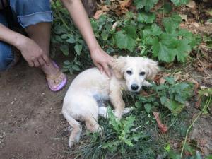 Tobby - chiens adoptés en 2013