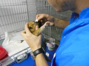 Betty (2) chez le vétérinaire (27 novembre 2012)