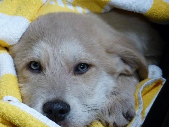 Roucky - chiens adoptés en 2013