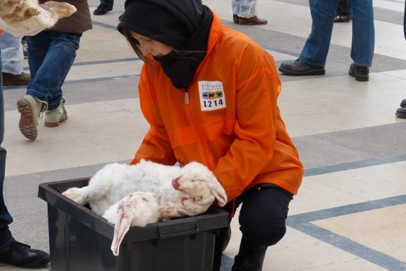 Des lapins - le bien-être animal
