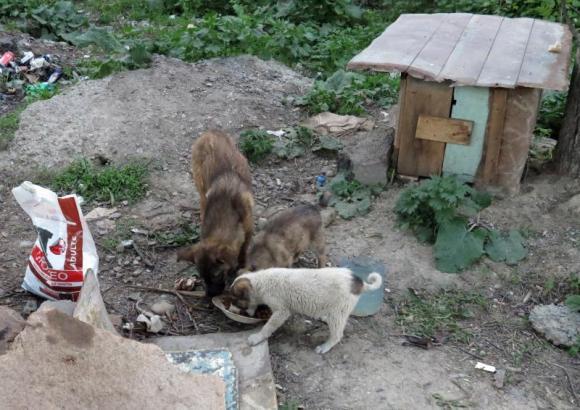 Les chiens du terminus_01 (26 avril 2013)