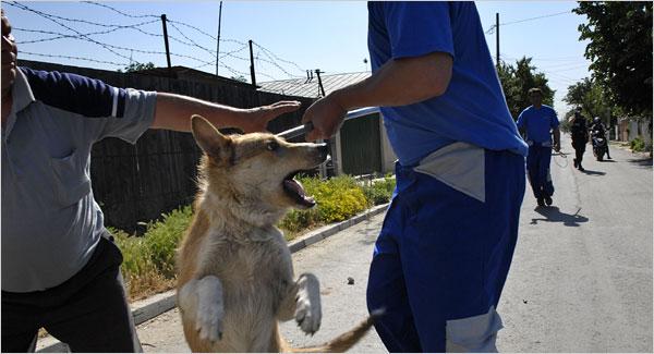 Extermination des chiens errants en Roumanie