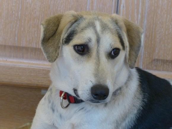 Ricky - chiens adoptés en 2015