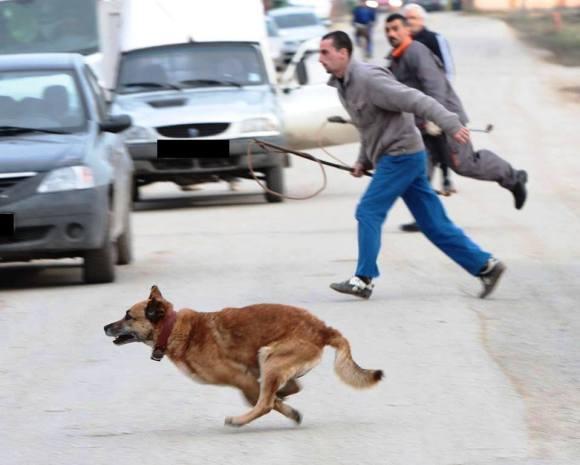 Chasse aux chiens (novembre 2013) - 10 chiens de Bucarest