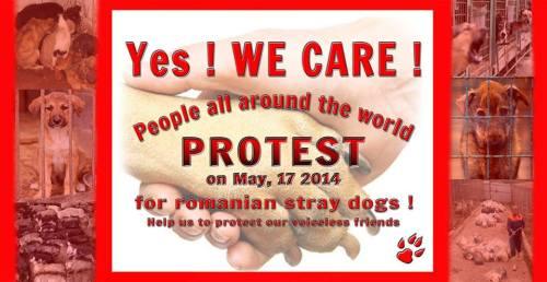 17 mai 2014 - Journée de protestation internationale